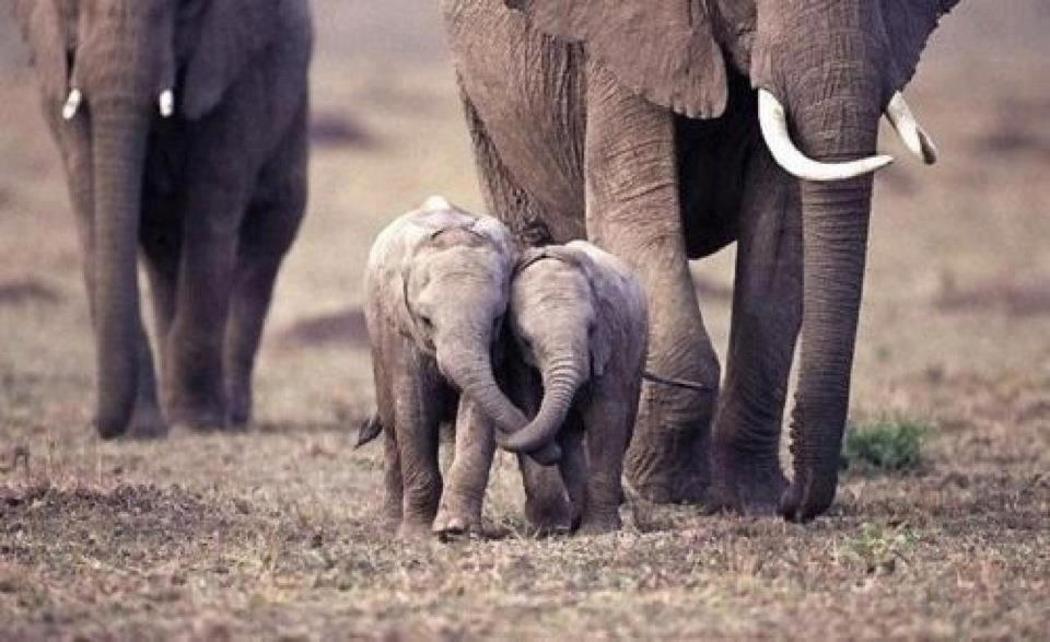 baby elephants holding trunks – The Practical Mystic