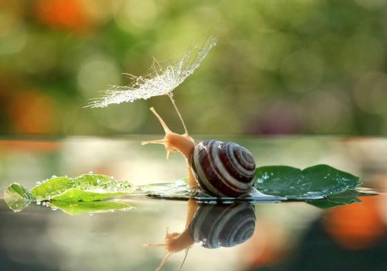 The magical world of snails captured by photographer Vyacheslav Mischenko